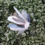 bijoux-d'oreille-ear-cuff-plume-naturelle-hivers