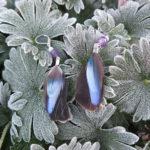 boucle-d'oreille-plume-naturelle-hivers
